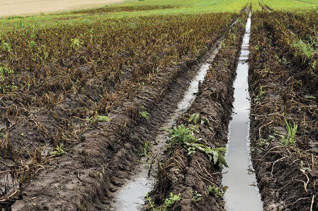 Из-за дождей колёсная техника в поле тонет.