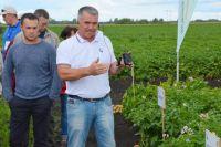 Новые сорта картофеля позволят не только увеличить урожай, но и будут более устойчивыми к вредителям и болезням.