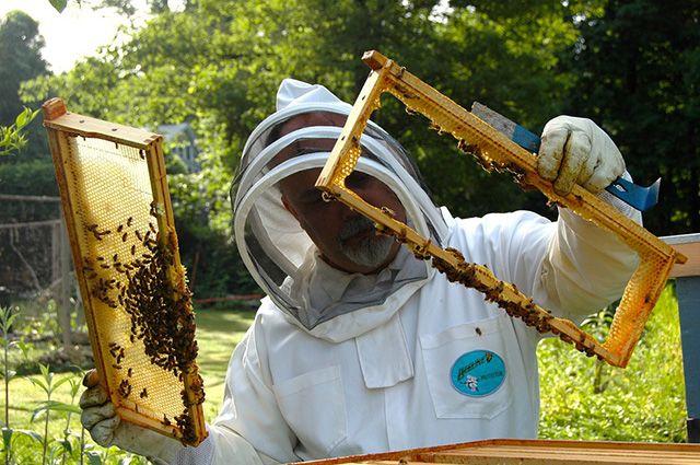В погоне за прибылью многие пасечники не заботятся о пчёлах.