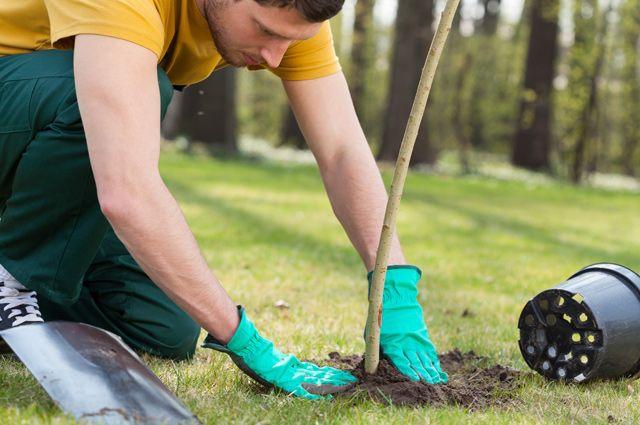 Можно ли обрезать деревья во дворе многоквартирного дома?