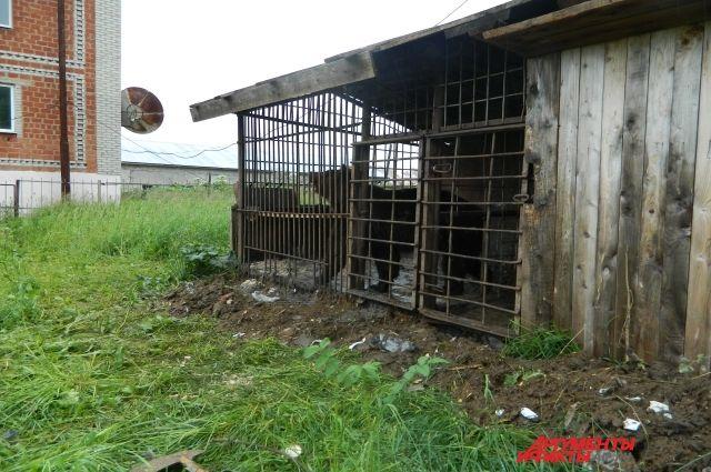 Мишка жил в тесной клетке.