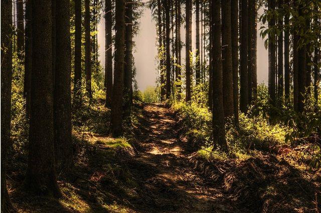 Уже сутки пожилые люди блуждают в лесу.