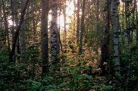 Мужчина весь день бродил по лесу.