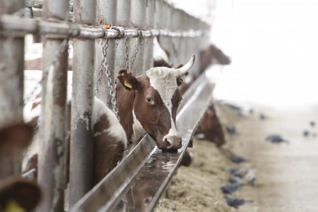 Сырьё на завод будут поставлять из Искитимского и Коченёвского районов