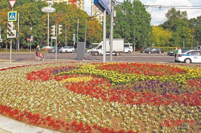 Достаточно ли цветников врайоне– решать жителям.