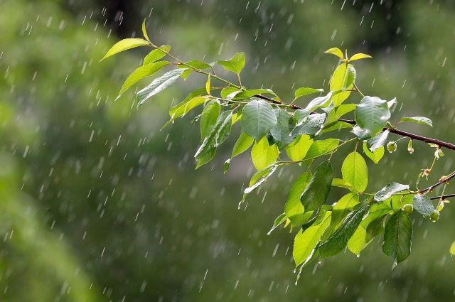 Теплая, но дождливая неделя ждёт на  с 19 по 23 августа.