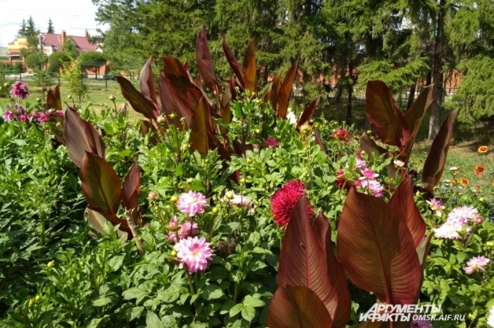Клумба с георгинами. Смотрители сада удивлены: раньше никогда георгины так пышно не цвели.
