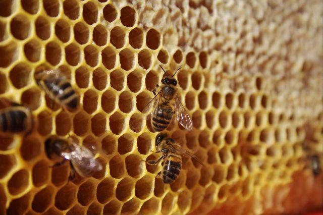 Россельхознадзор не обнаружил опасных веществ в меде из Удмуртии