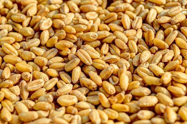 Комбайнёр из Гусева пытался похитить с работы 7 тонн пшеницы