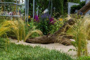 Сухой ручей в саду.