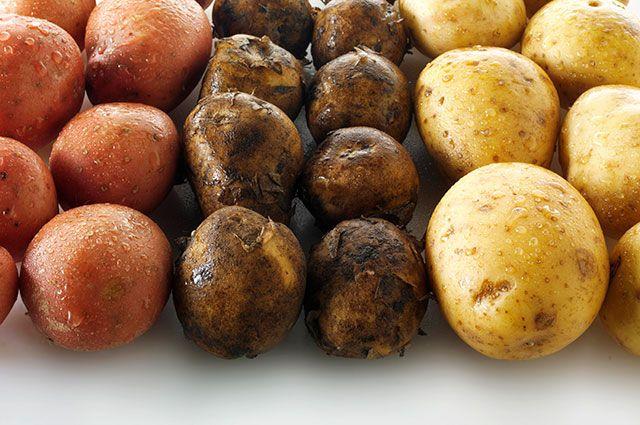 Молодой, свежий или ранний? Как правильно называть картофель