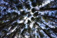 Мужчина и женщина всё это время были в лесу.