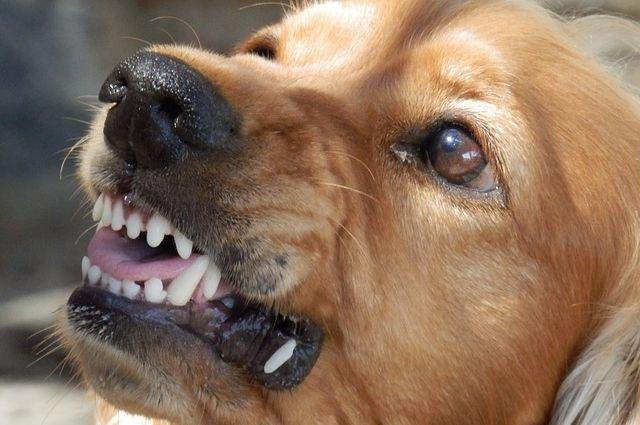 Бездомные собаки в Тобольске испортили бампер автомобиля