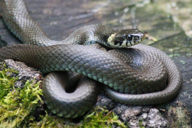 Змеи, как правило, вызывают страх и отрицательные эмоции
