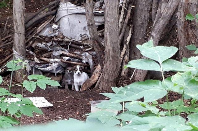 В Тюмени возле ТЭЦ-1 в шалаше живет семейство собак