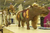 Детёныш шерстистого носорога Саша.