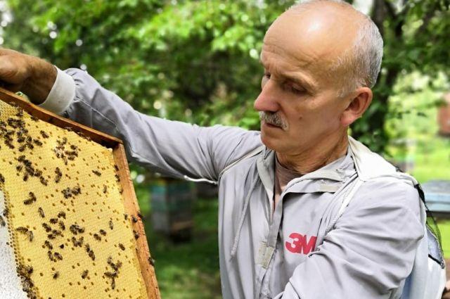 У Сергея Широковского погибло 2 килограмма лётной пчелы.