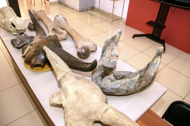 В Азове нашли бесхозную кость мамонта