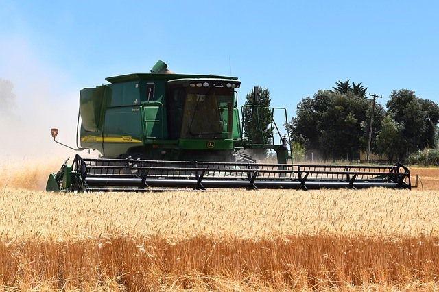 Урожай зерновых в этом году надеются собрать не хуже прошлогоднего, а если повезёт, и чуть больше.
