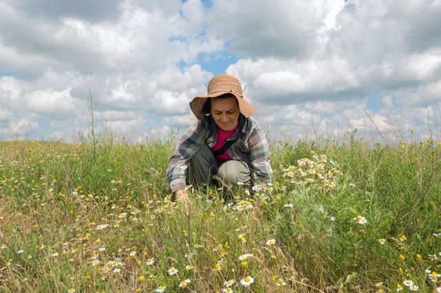 Трава у дома. Что выиграет РФ, возродив выращивание лекарственных растений?