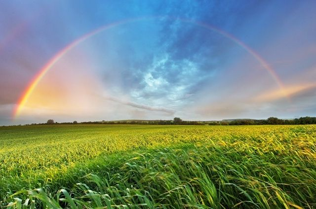 Погода на 23 августа: Украину ждет жаркая погода с возможными грозами