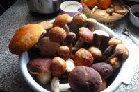 Народными приметами с грибниками поделилась жительница тюменской деревни
