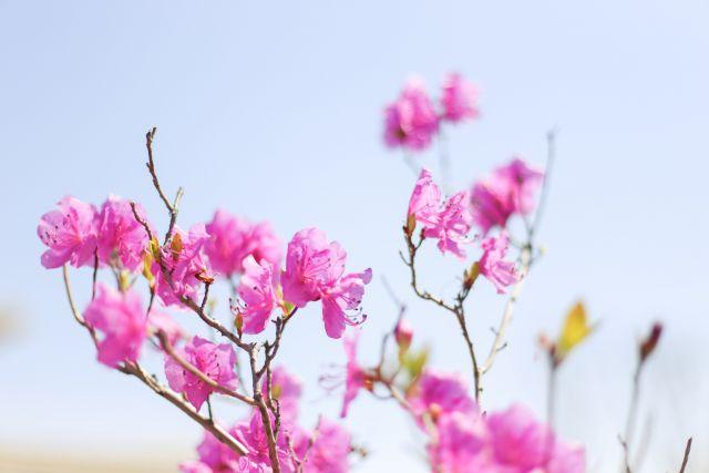 Япония подарит Оренбургу сад сакуры