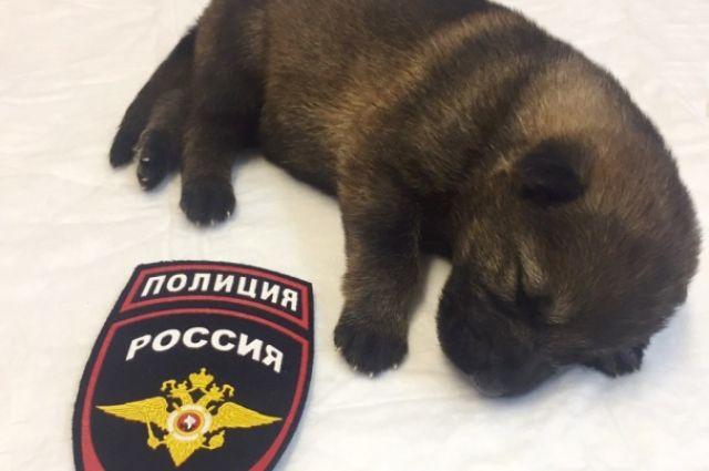 Четвероногий страж порядка родился 14 августа.
