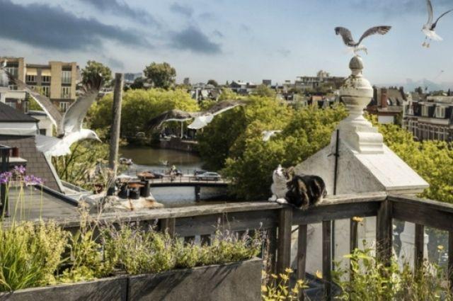 В фильме «Дикий Амстердам» Марк Веркерк показал голландскую столицу глазами котов, чаек, пчёл, белок, крыс, лис, ястребов и других обитателей большого европейского города