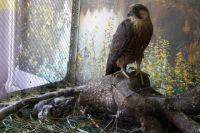 Ценных птиц у мужчины изъяли и передали на ответственное хранение на станцию юных натуралистов. Жизни птенцов ничего не угрожает.