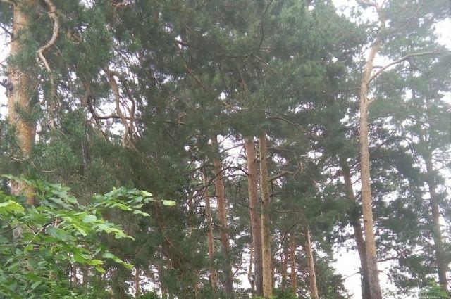 Пропавшие заблдились в лесу.