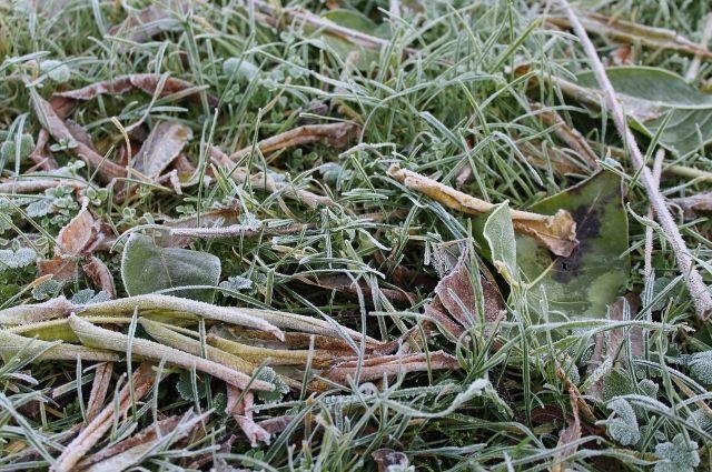 В Удмуртии 30 сентября ожидаются первые заморозки на почве