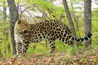 Леопард и не ведает, какого хорошего друга приобрёл.