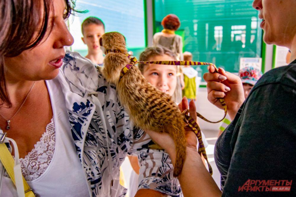 Кипиш наводил «кипиш» - лазил по плечам гостей зоопарка и грозился укусить тех, кто не слишком осторожно его гладил. Впрочем, и за ним, и за посетителями следили работники зоопарка.