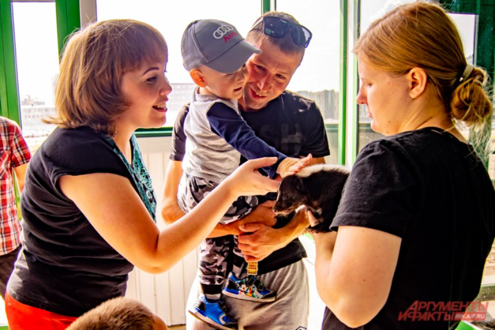 25 августа в зоогалерее провели тестовое открытие, и на нём гостям впервые разрешили контактировать с некоторыми животными: сурикатом, скунсом и бинтуронгом.