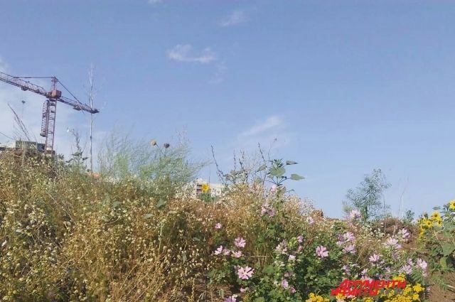 В Оренбурге застройщик незаконно занял земельный участок