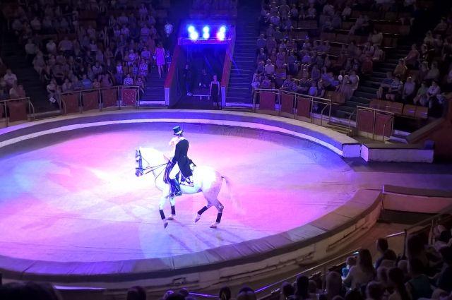 Новосибирская Мега выселяет цирк-шапито со своей территории