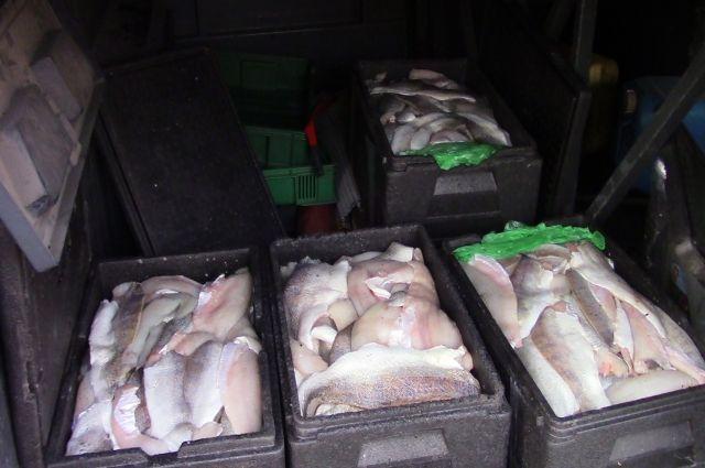 Гражданин Польши пытался вывезти партию рыбы в пассажирском автобусе