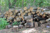 На участке рубили деревья без законных оснований.