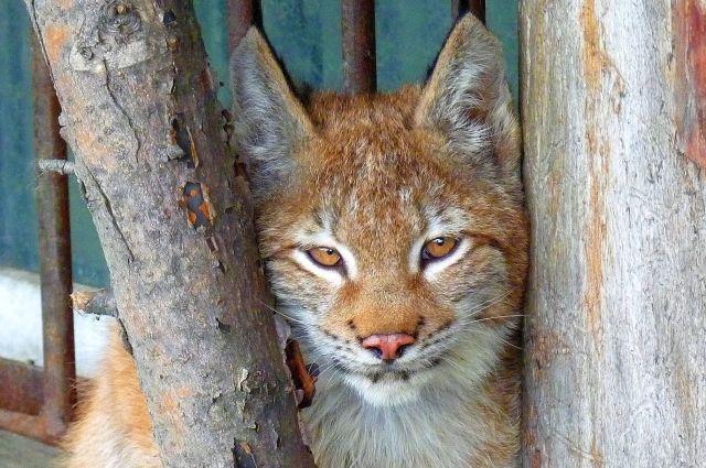 В Большереченском зоопарке выбирают имена новым питомцам