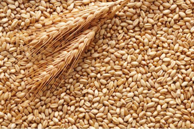 Украина значительно увеличила экспорт зерновых