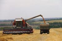 32180 т зерна намолотили в «Родине».
