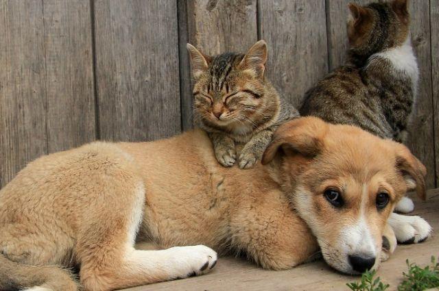 Ничейные и ненужные. Как можно спасать бездомных животных
