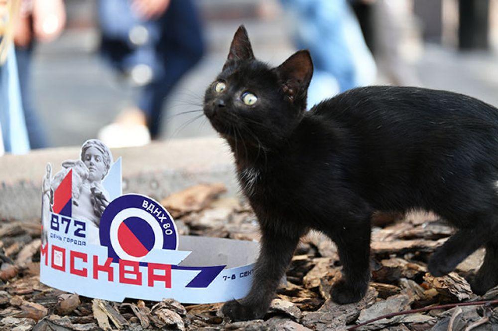 Кот на Тверской улице в День города.