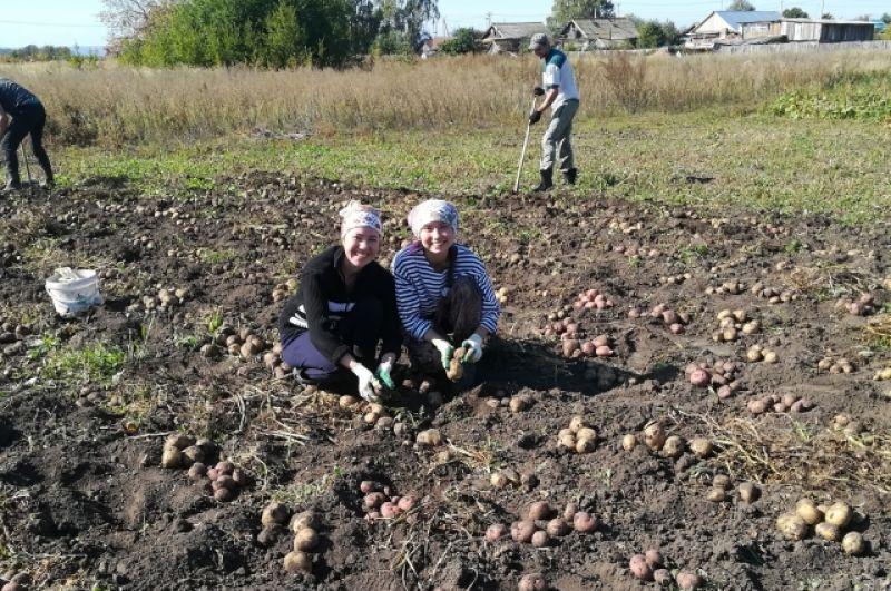 Участник №1 Эльмира Исмагилова: «В этом году собрали рекордный урожай картофеля – 23 мешка»