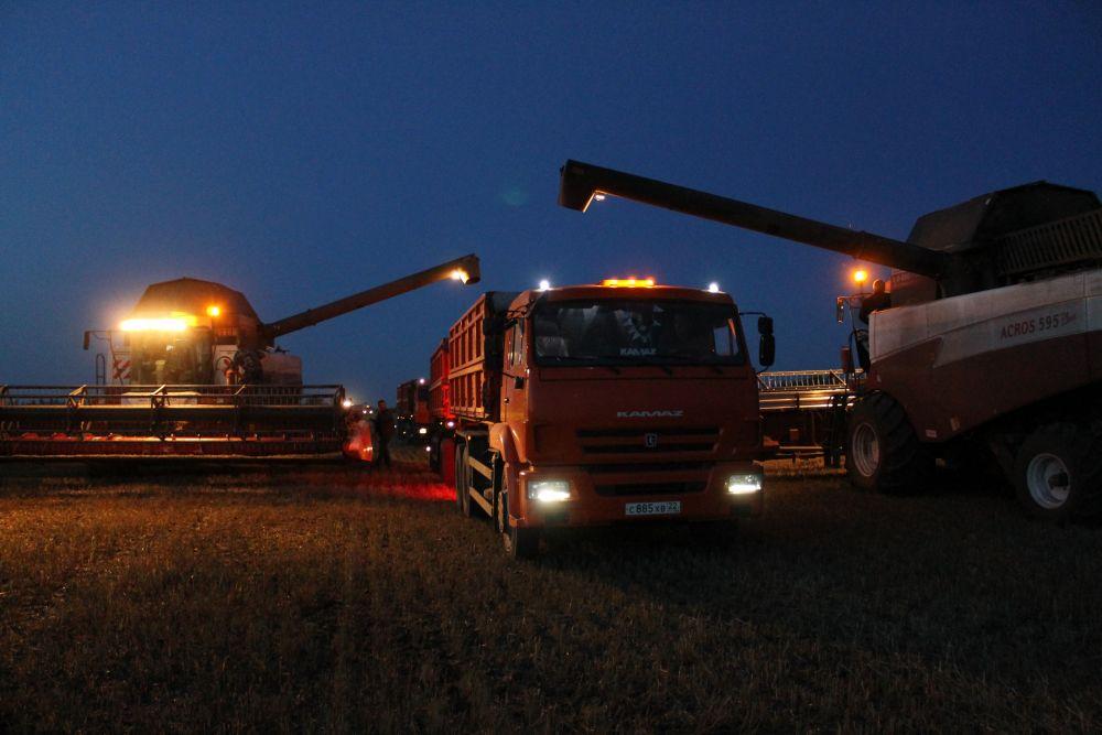 Чтобы успеть убрать урожай до наступления холодов, аграриям приходится трудиться и днем, и ночью