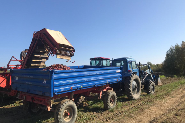 В ЯНАО агропромышленные предприятия приступили к сбору картофеля