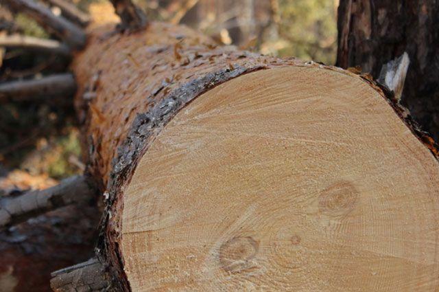 Наиболее активно лес вырубали в 4-х районах.