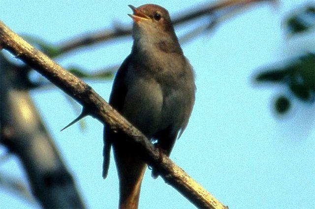 Тюменцы могут воспроизвести пение птиц на озере Алебашево