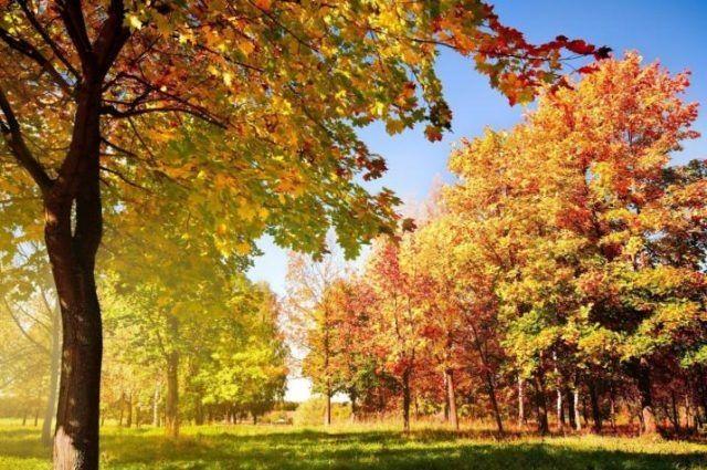 Погода на 11 сентября: в Украине будет теплая и сухая осень